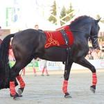 Quebranto PRE Hengst vom Andalusier Gestüt Sueno Negro