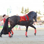Gestüt Sueno Negro auf dem Fest der Pferde, Immenhöfe